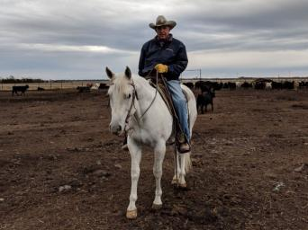 Duane Walker, a Saint Luke's Mid America Heart Institute patient, riding his white horse in a pasture of cattle.